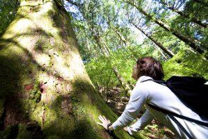 大木に触れる